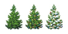 Vector Illustration Of Decorated Christmas Tree In Snow On White Background. Green Fluffy Christmas Pine, Isolated On White Background 1.4