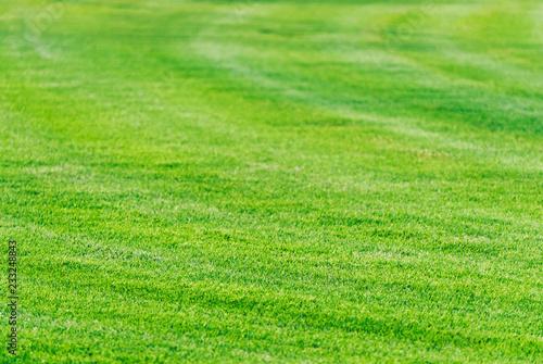 Fotografie, Obraz  Perfect mowed green grass lawn background.