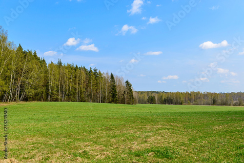 Forest and medow landscape