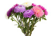 bouquet of asters isolated
