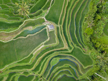 Aerial Top View To Tegallalang Rice Terraces Near Ubud. Photo From Drone. Beautiful Scenes Of Rice Paddies And Well-known Spot For Tourists. Bali, Indonesia.