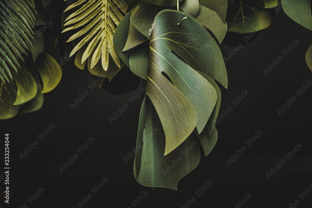 Fototapeta Piante e foglie decorative