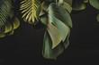canvas print picture - Piante e foglie decorative