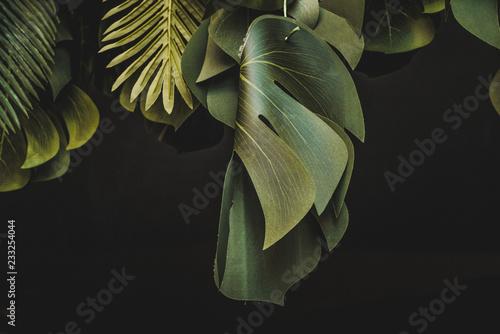 Fotografija  Piante e foglie decorative