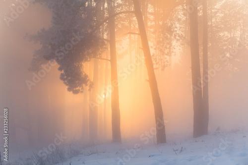Fabulous winter forest Canvas-taulu