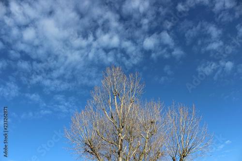 Fotografie, Obraz  North Sea landscape 4.
