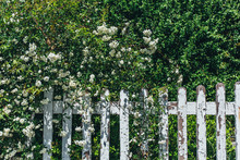 Wooden Fence With Green Plant And Flowers