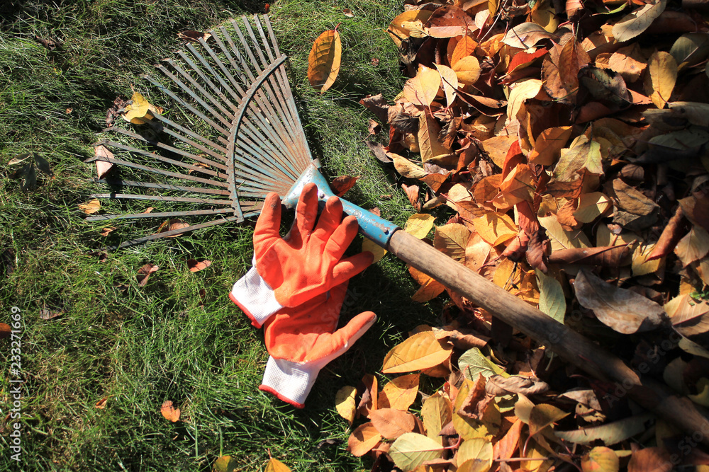Fototapety, obrazy: A fan rake and gloves lie on the grass next to fallen autumn leaves.
