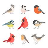 Fototapeta Fototapety na ścianę do pokoju dziecięcego - Collection of cute winter birds