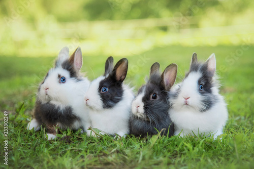 Four little rabbits sitting on the lawn in summer Fotobehang