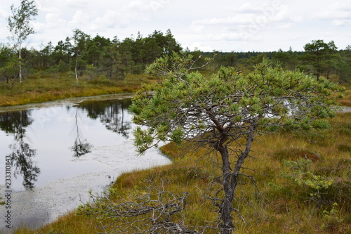 Foto op Aluminium Wit Kemeri national park, bog and lakes landscape picture with trees refelcting in the water