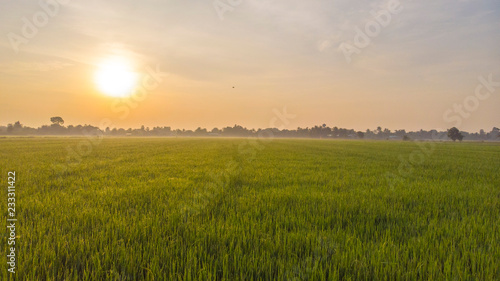 Foto auf AluDibond Beige Field _ sun