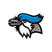 Blue Jay Head Mascot