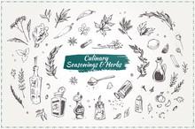Culinary Seasonings And Herbs. Hand Drawn Icons