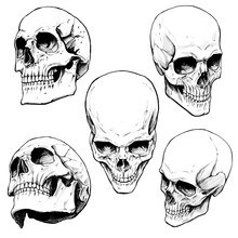 Collection Of Painted Skulls