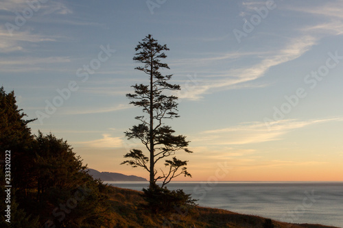 Fotografie, Tablou  The iconic Sitka Spruce tree at Ecola Point on the Oregon Coast at sunset