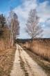 Schotterweg führt durch Riedlandschaft