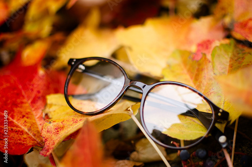 Rounded eyeglasses on autumn leaves