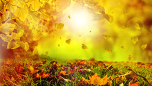 Autumn Gold Leaves On A Beautiful Nature Bokeh Background With Forest Sunny Ground