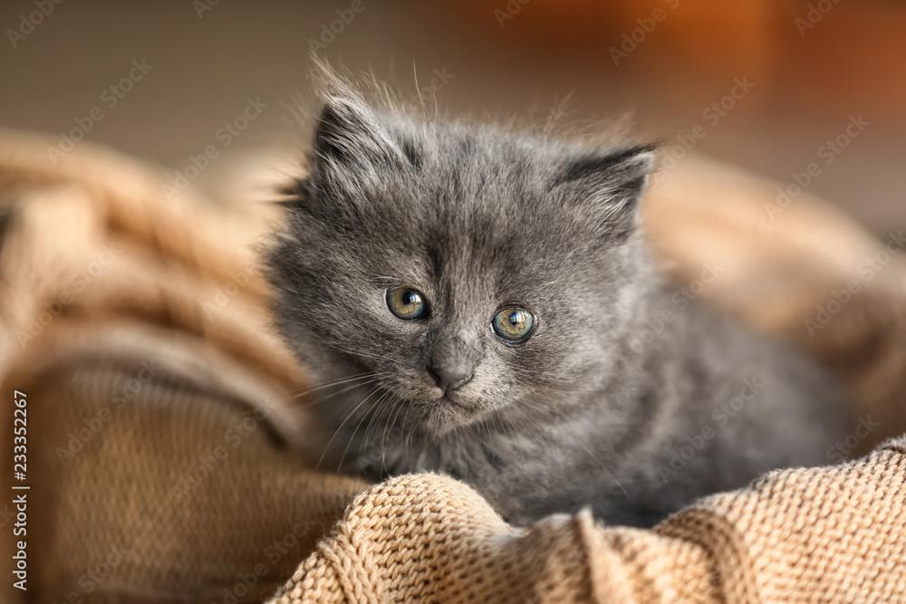 Fototapety, obrazy: Cute little kitten on warm plaid