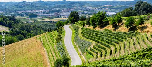 Vineyards near Barbaresco, Cuneo, in Langhe Wallpaper Mural