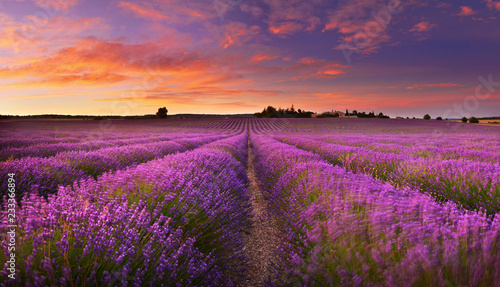 Fotobehang Lavendel Lavender field at dawn