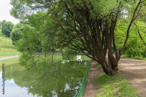 Spoed Foto op Canvas Bomen willow by the water