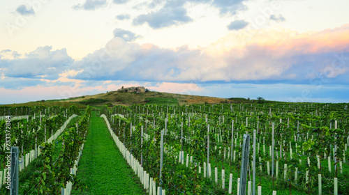 Foto op Plexiglas Groene Vineyard at sunset with dramatic clouds
