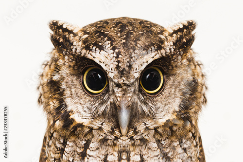 Deurstickers Uil Owl face in high resolution, owl isolated.