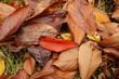 jesienne liście w ogrodzie