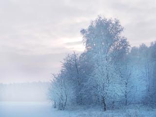 Fototapeta Do biura Piękny biały zimowy krajobraz