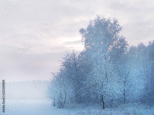 Piękny biały zimowy krajobraz - 233384469