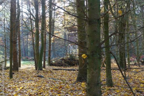 Valokuva  Herbstwald Hochsitz Laubbäume Blätter Laub