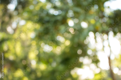 Arbre Natural green blurred abstract for background