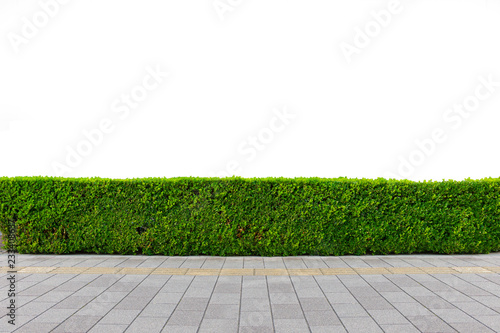 Green hedge or Green Leaves Wall on isolated Fototapet