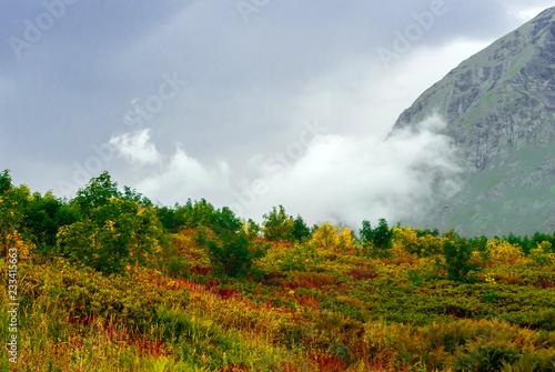 Fotografia  landscape - alpine meadow with bright colorful autumn vegetation, and a mountain