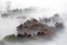 Panorama Sulla Foresta Nebbiosa, Italia