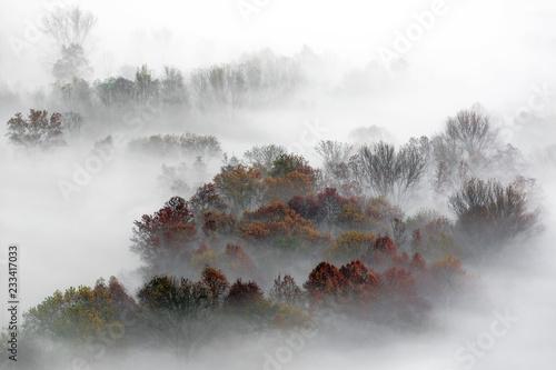 panorama-na-mglowym-lesie-wlochy
