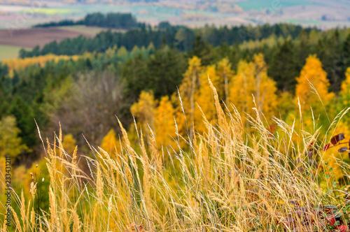 Obraz Oznaki jesieni - fototapety do salonu