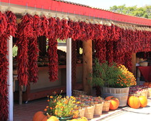 A Line Of Red Dried Bunches Of...