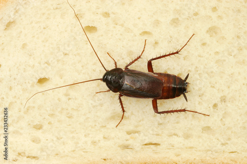 Cockroach Crawling On Slice Of Bread