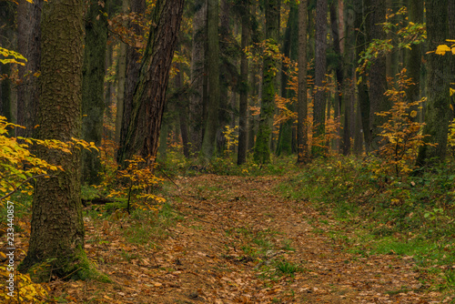 Deurstickers Bos Dark color autumn forest with leaf trees near Luhacovice town