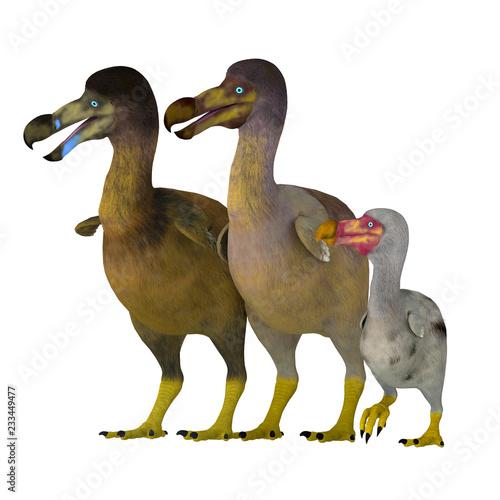 Fotografie, Obraz  Dodo Bird Family - The Dodo is an extinct flightless bird that lived on Mauritius Island in the Indian Ocean near Madagascar