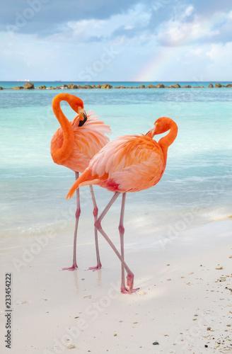 Wild Pink Flamingos on a Caribbean Beach Canvas Print