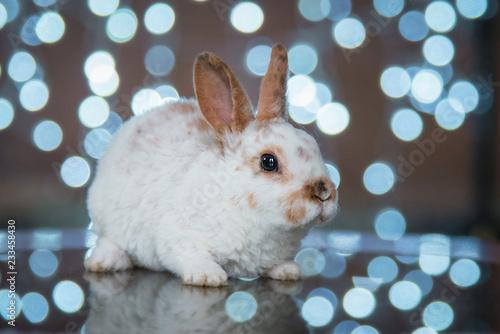 Little rabbit on Christmas