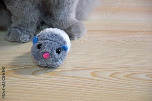 Fotografía  Feline fluffy paws close-up on a wooden floor