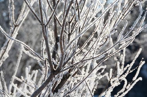 Staande foto Paardebloemen en water 朝日に輝く霧氷