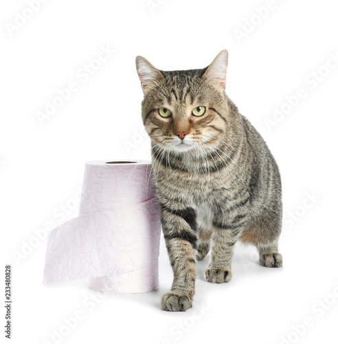Cute Cat With Rolls Of Toilet Paper On White Background