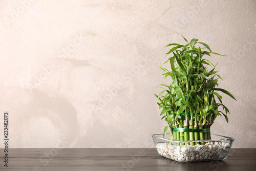 Green bamboo in glass bowl near color wall. Space for text
