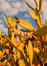 Eyes On Cactus